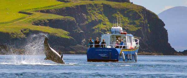 """Dingle Boat Tours Kerry"""
