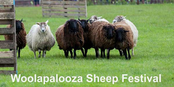 """Airfield Woolapalooza Sheep Festival"""