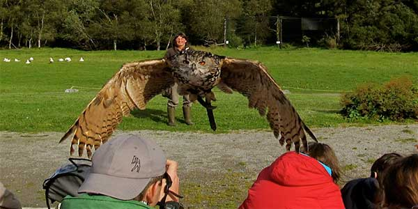 """Eagles Flying Bird of Prey Centre"""