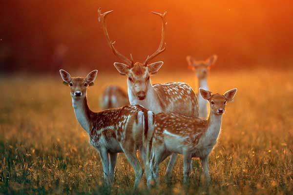 """""""Meet the Christmas Deer in Phoenix Park"""""""