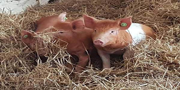 """""""Sandy Feet Farm Kerry"""""""