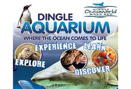 """""""Dingle Oceanworld Aquarium"""""""