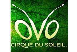 """""""Cirque Du Soleil show OVO"""""""