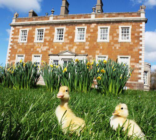 """Newbridge House and Farm"""