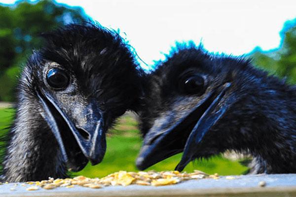 """Glendeer Pet Farm"""