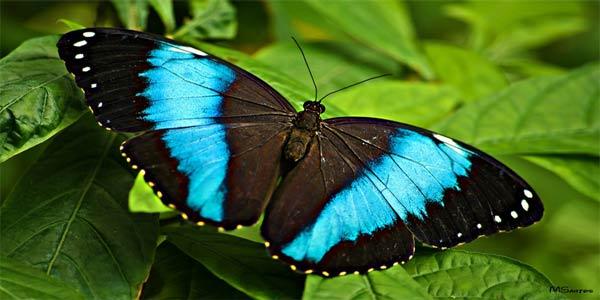 """Dingle Oceanworld Butterfly Oasis"""
