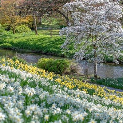 """""""Birr Castle Demesne Garden Walk"""""""