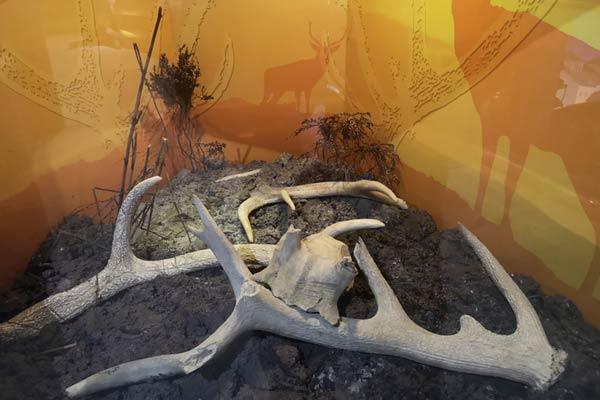"""""""galway aquarium antlers"""""""