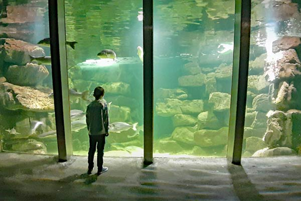 """galway aquarium fabulous ocean tank"""