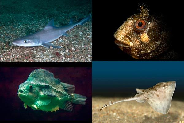 """""""galway aquarium montage"""""""
